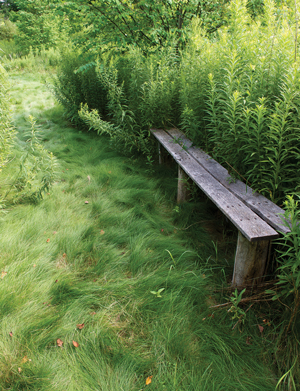 "Long Bench in Old Pasture with ""No Mow"" grass and goldenrod"