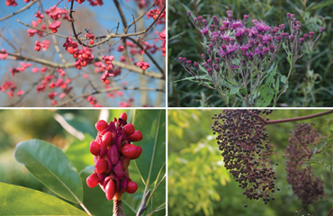 Native plants in the GardenLarge Nursery