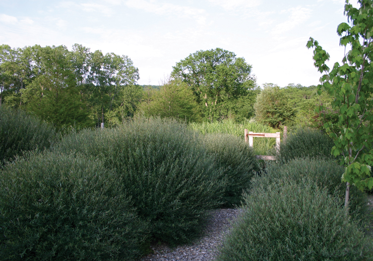 Gravel path in the Brine Garden