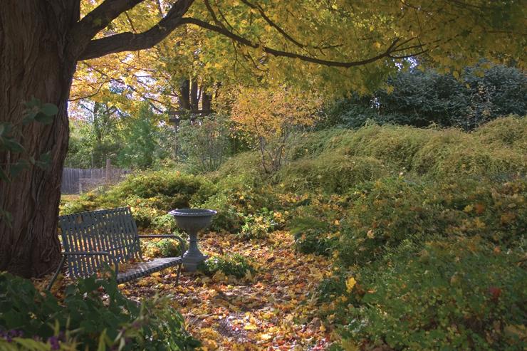 Bench and urn under maple tree in the Brine Garden