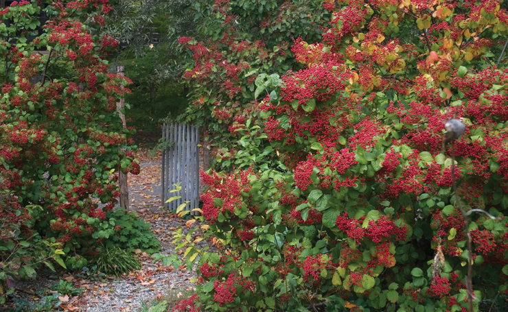 The Brine Garden